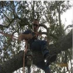 Windsor & Son Tree Service image 0