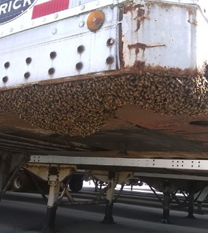 A Affordable Bee Removal Service