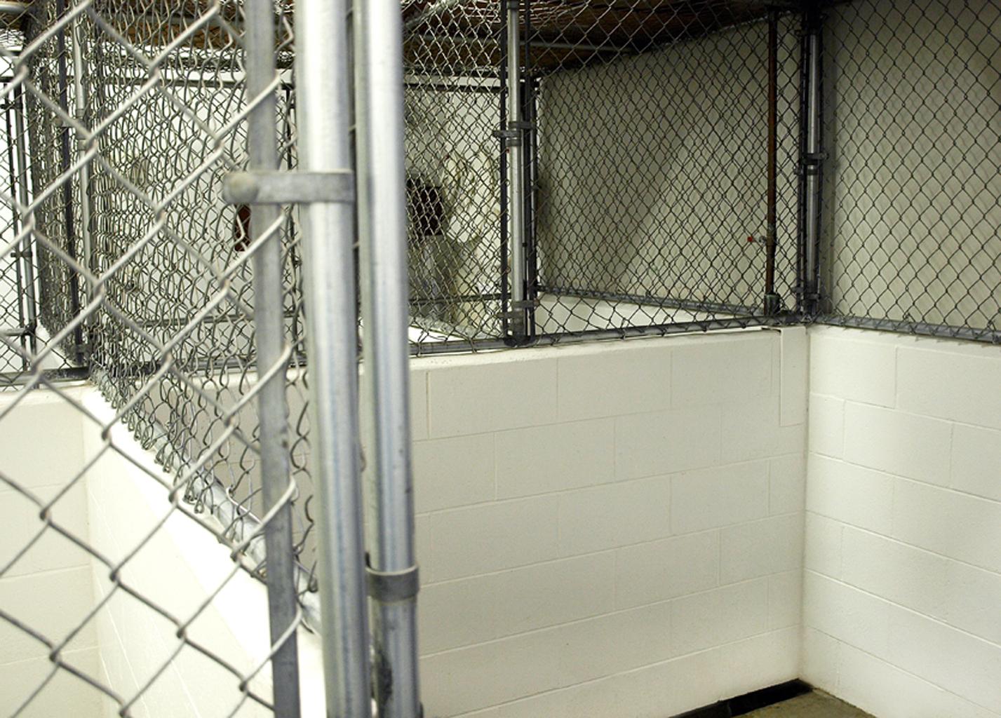 VCA Big Lake Animal Hospital image 6