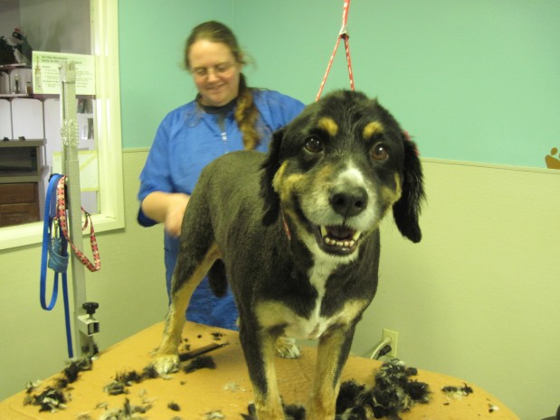 We offer many things other clinics do not. We have full grooming services available for your pets. Whether it be just a bath, a hair cut, or a full shave down, We can do it all!