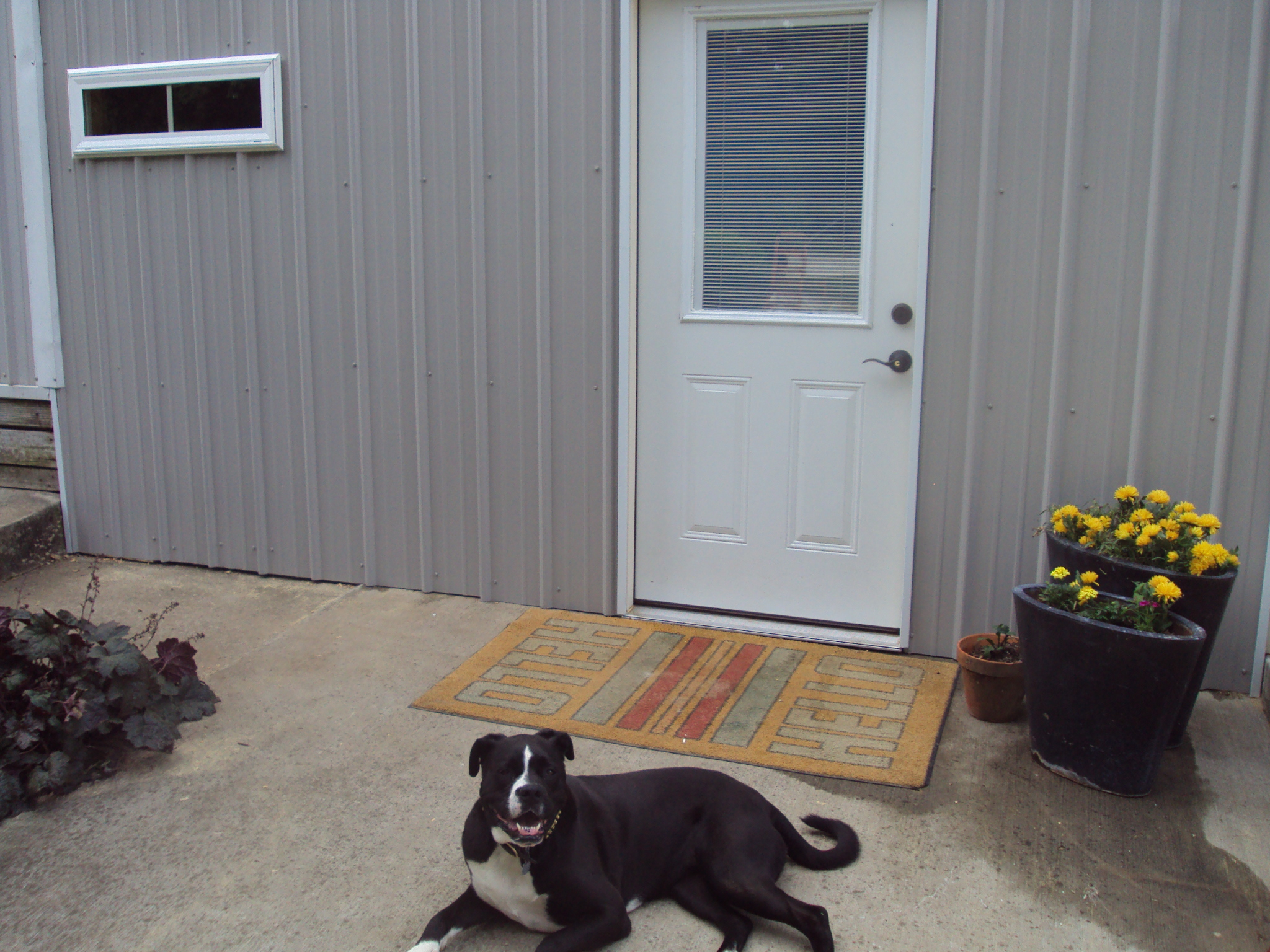 Beech Grove Stable and Kennels image 5