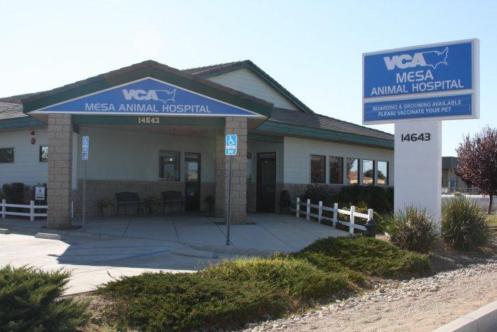 VCA Mesa Animal Hospital image 7