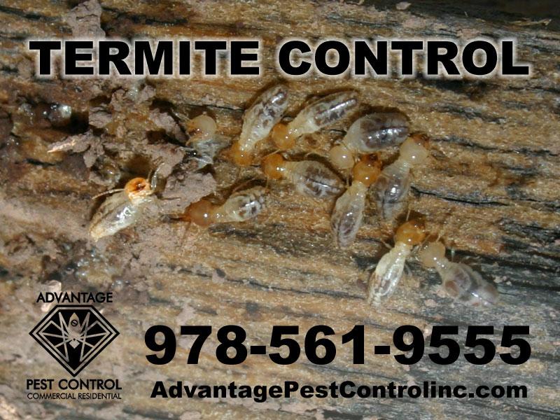 Advantage Pest Control, Inc image 5