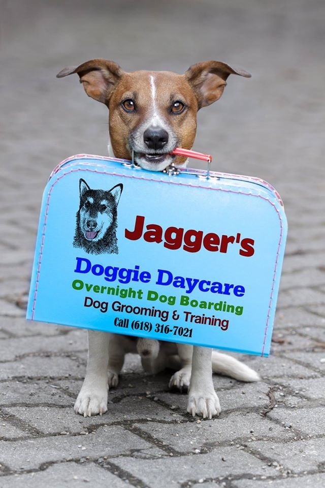 Jagger's Doggie Daycare, Dog Grooming, Training & Boarding image 22