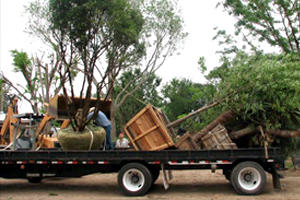 Alfaro Tree Sales Inc image 2