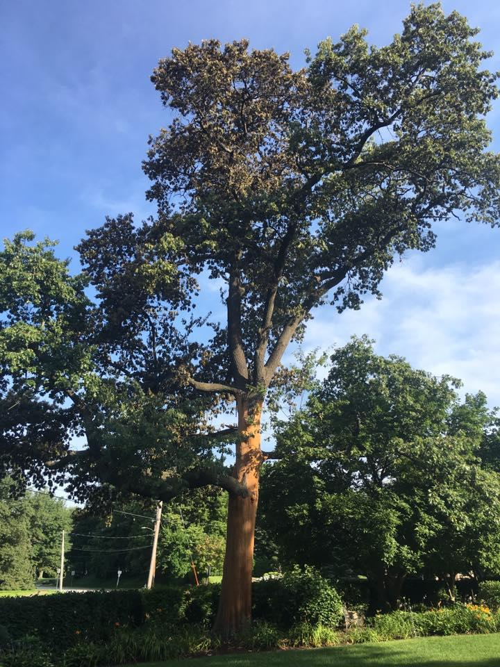 Freers & Sons Tree Service image 4