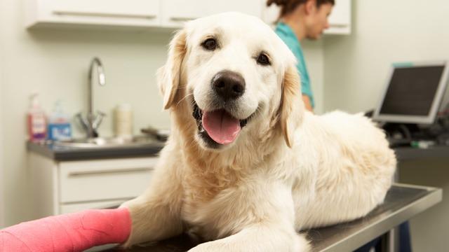 Lisburn Veterinary Clinic
