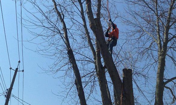 Arbor Master image 2