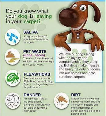 McHugh's Chem-Dry Carpet Cleaning