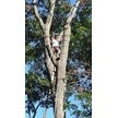 Schaeffers Tree Service