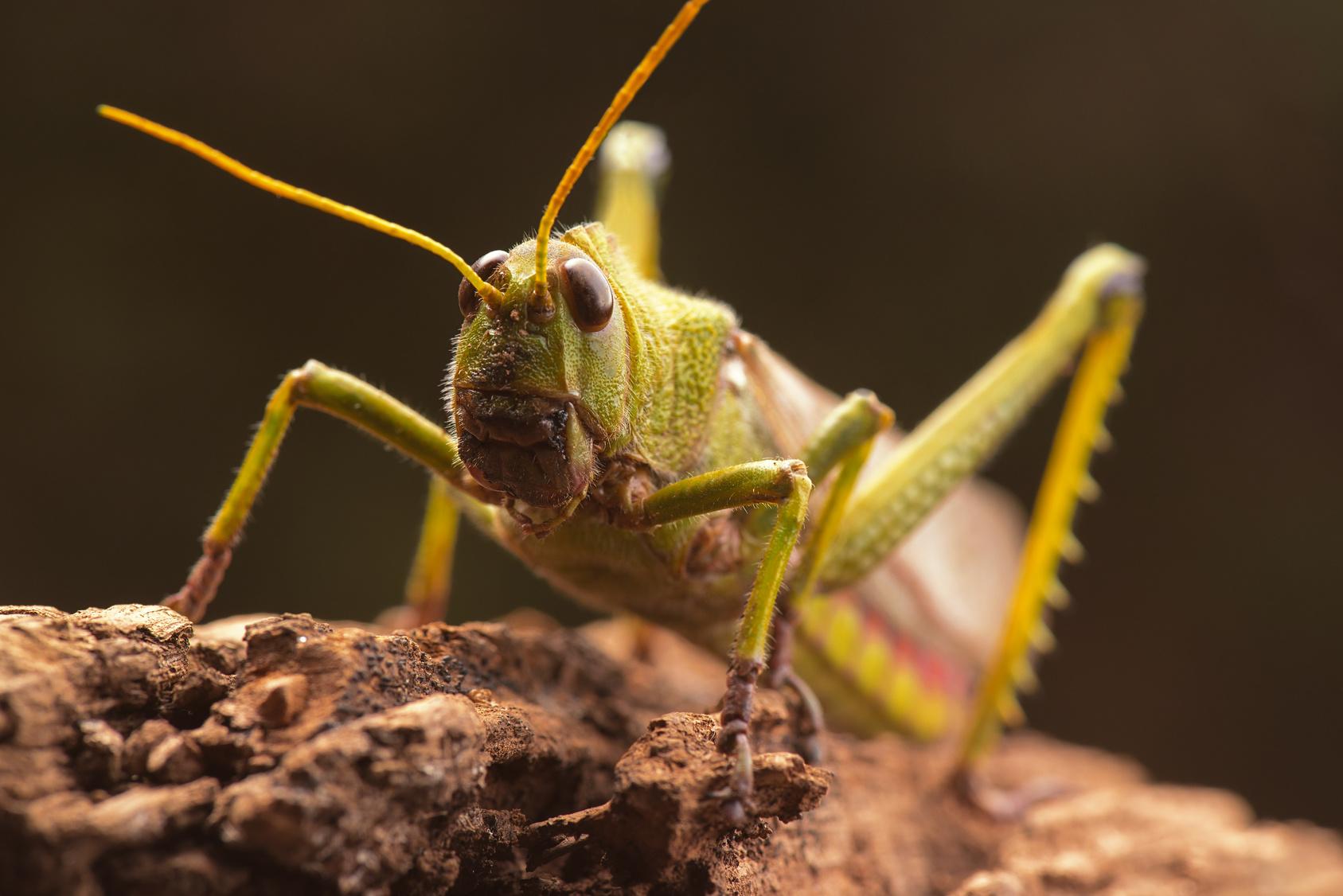 Verminator Pest Control LLC image 9