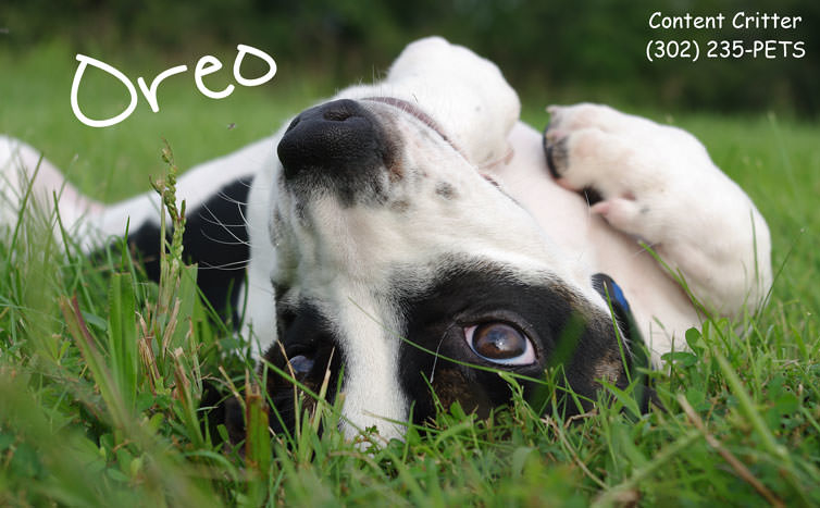 Content Critter - Pet Sitters & Dog Walking image 3