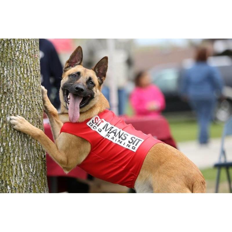 Dog Training Mequon Wi
