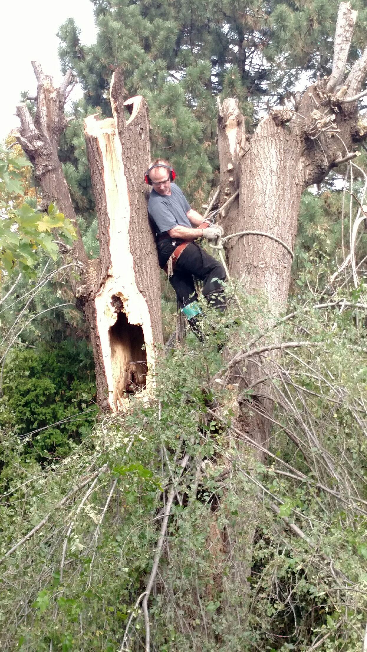 Anway's Tree Service