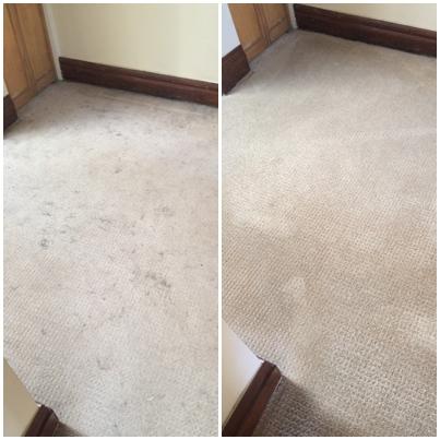 Pristine Carpet Cleaning image 21