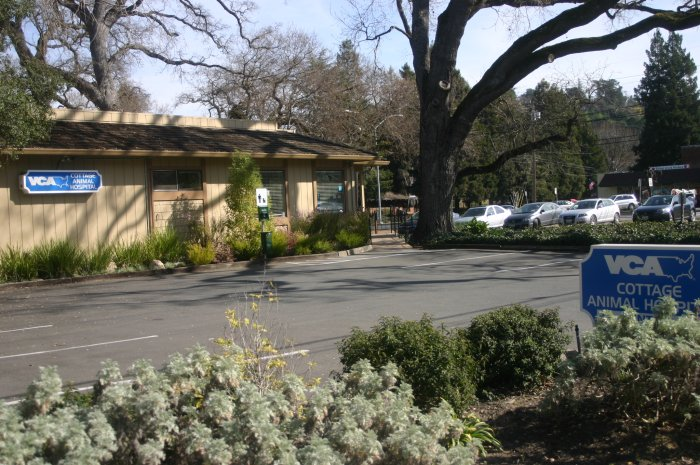 Vca Animal Hospital in Walnut Creek, CA, photo #8
