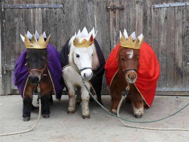 Equestrian Enterprises, Inc. image 0