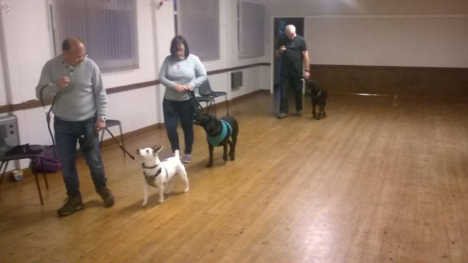 Online Service Dog Training Schools