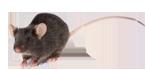 Crown Exterminators image 4