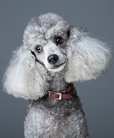Kendall Park Pet Care Grooming image 2