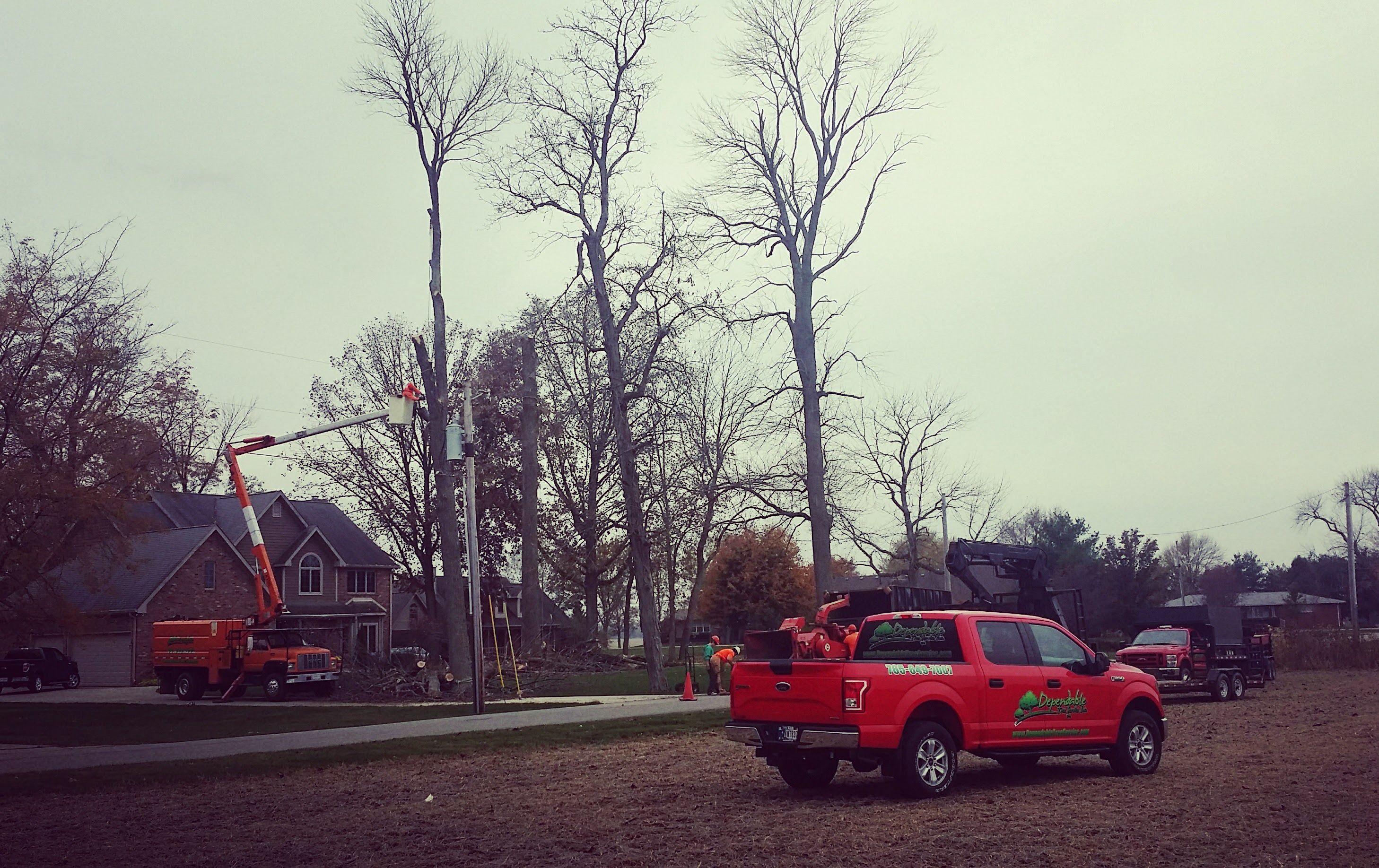 Dependable Tree Service, Inc image 0