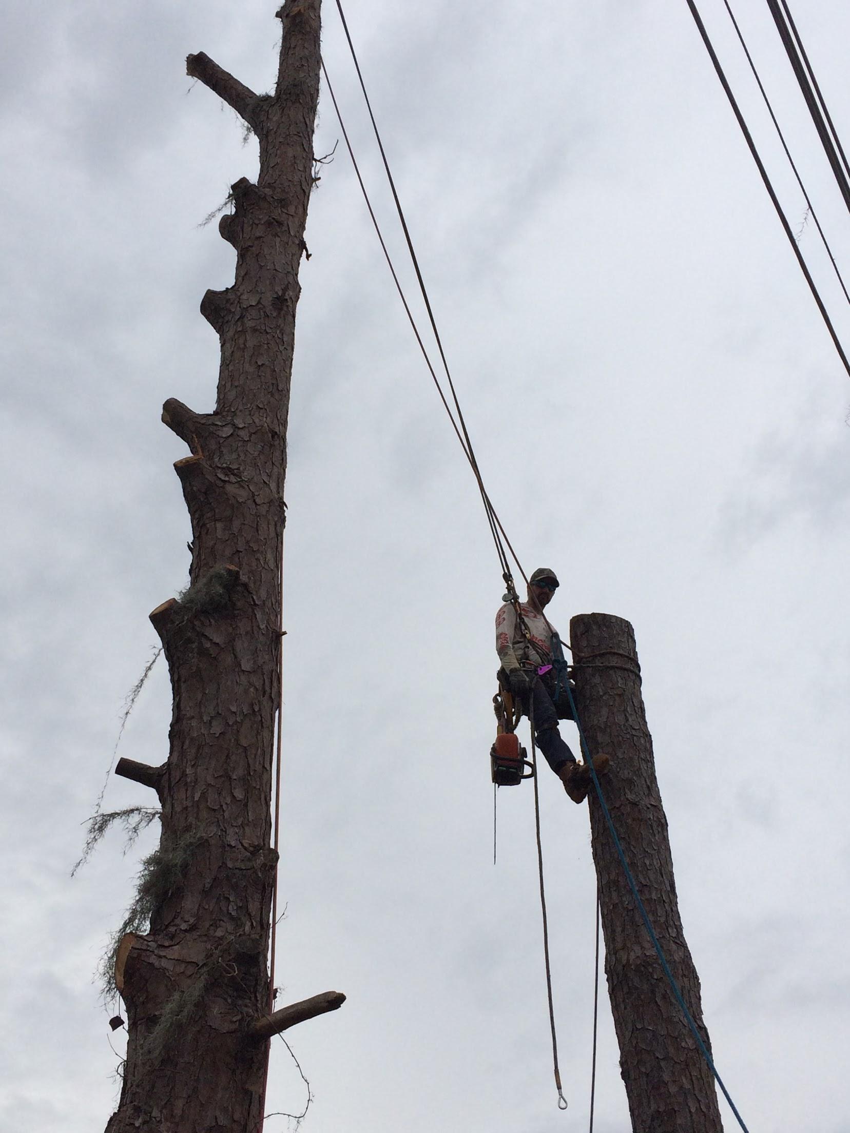 Karney Tree Service image 15
