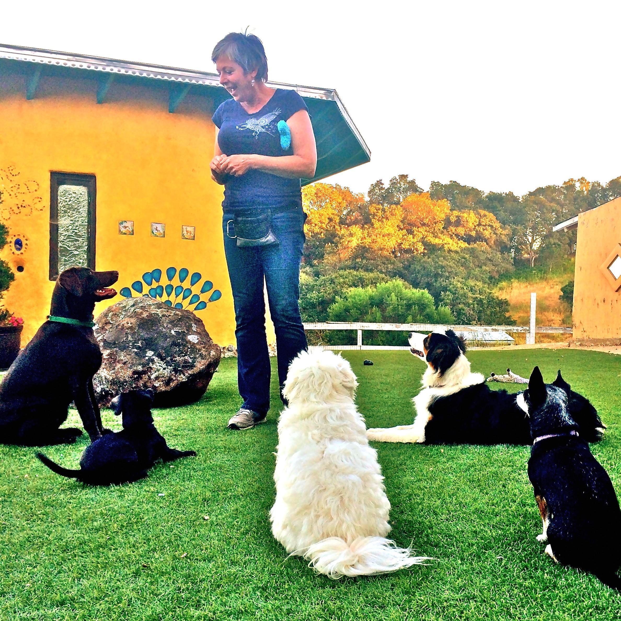 Bingo Dog Training and Boarding School