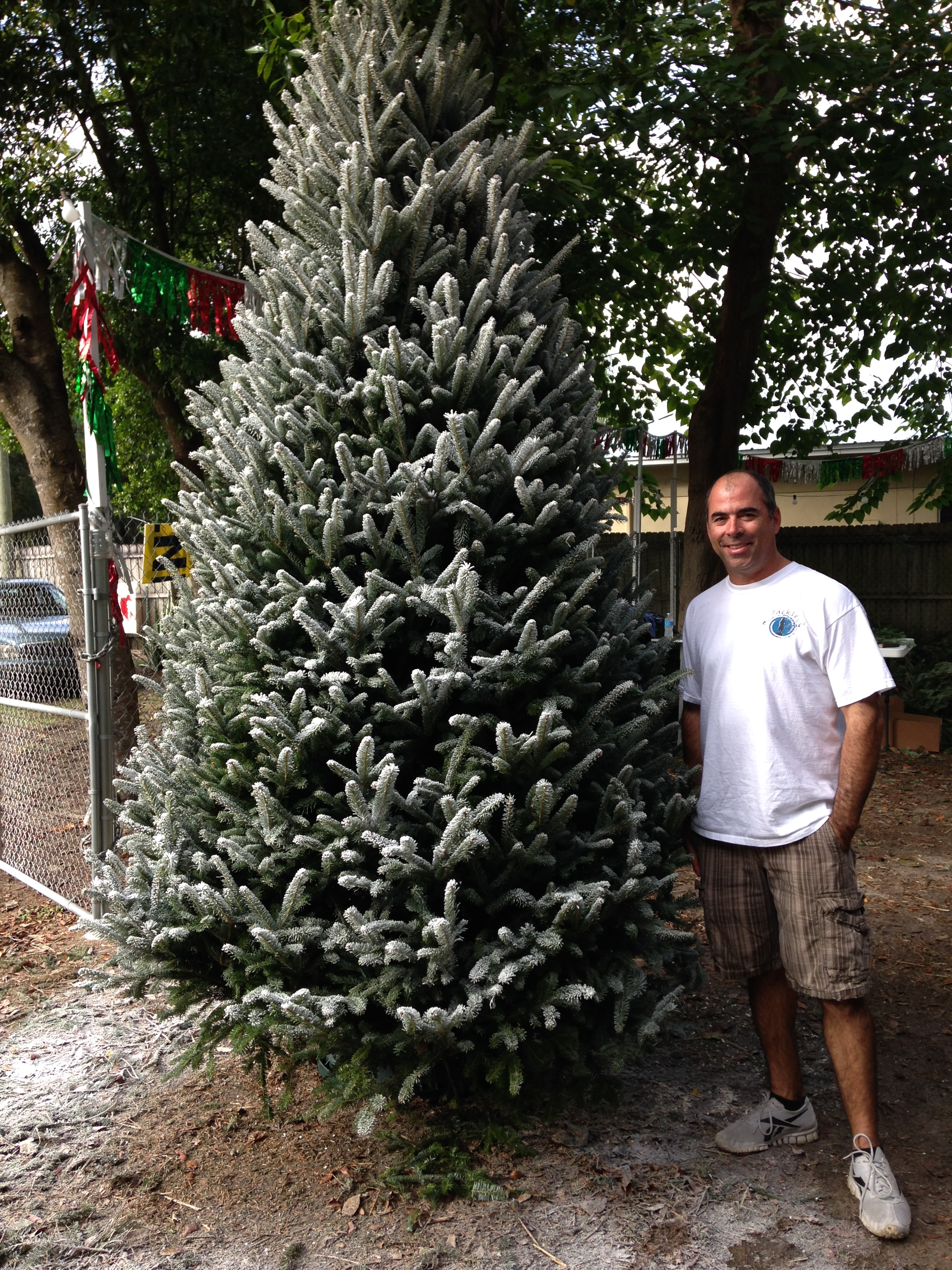 Dave's Christmas Tree Lot image 1