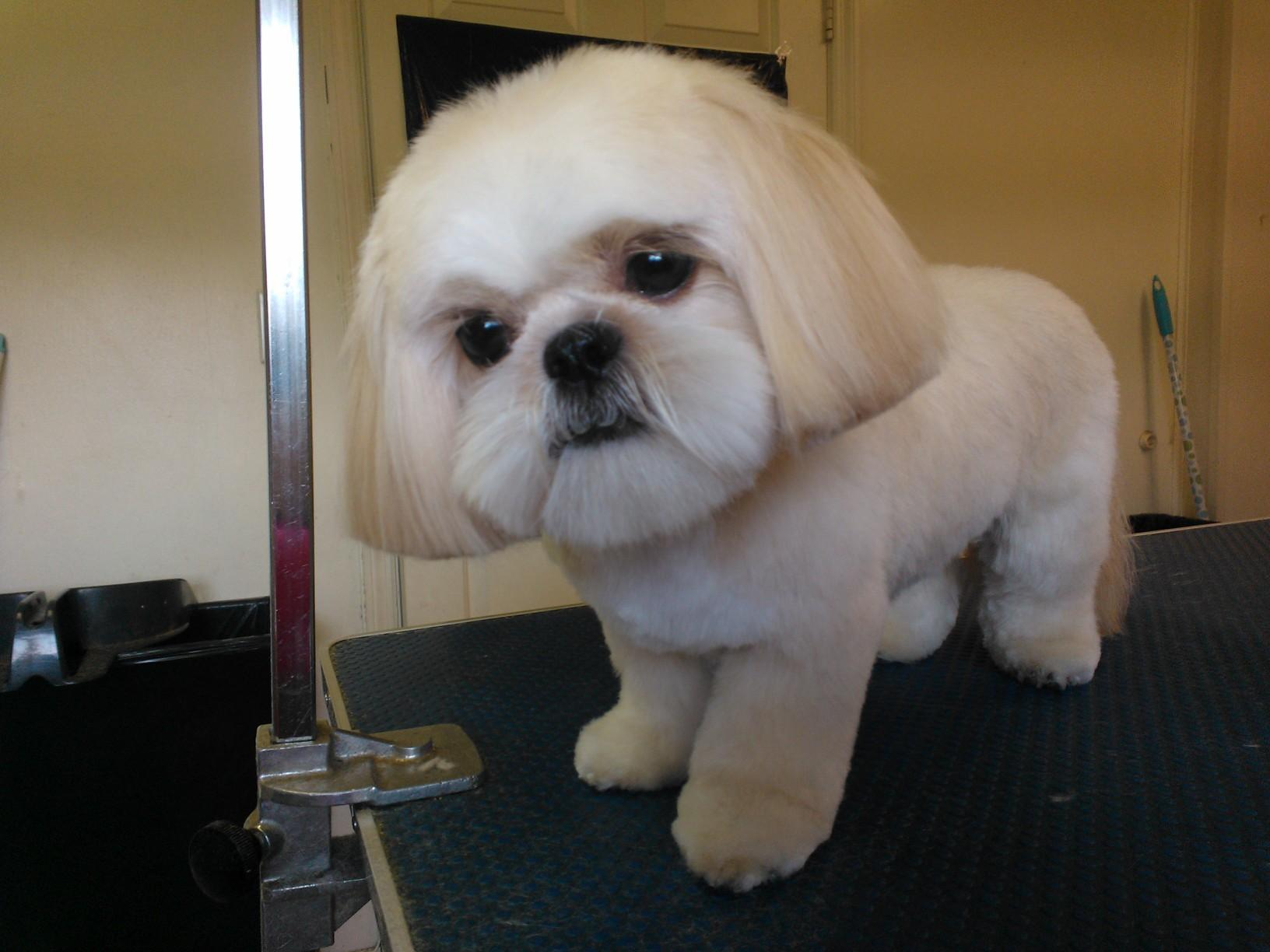 Personal Touch Dog Grooming image 8