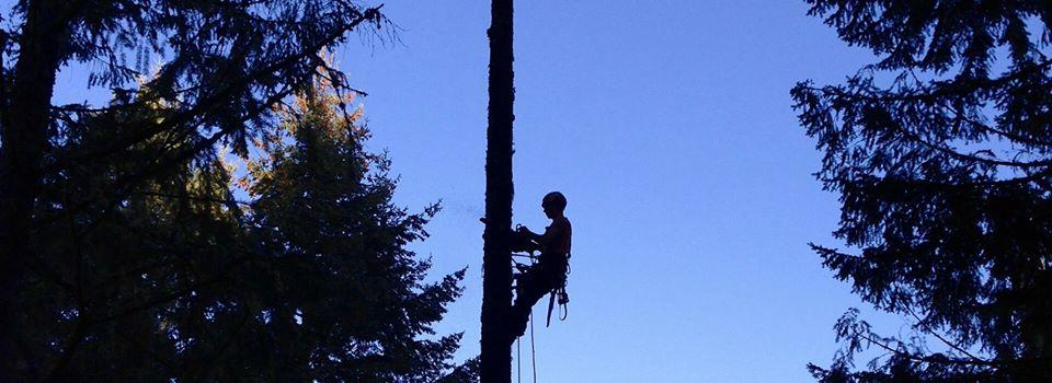 Blue Sky Trees Inc. image 0