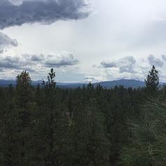 Central Oregon Tree Experts image 21