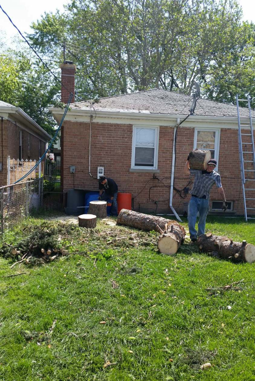 AJAX Tree Service image 4