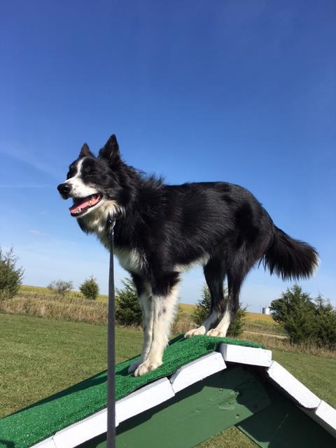 Ledges Farm Dog Camp image 9