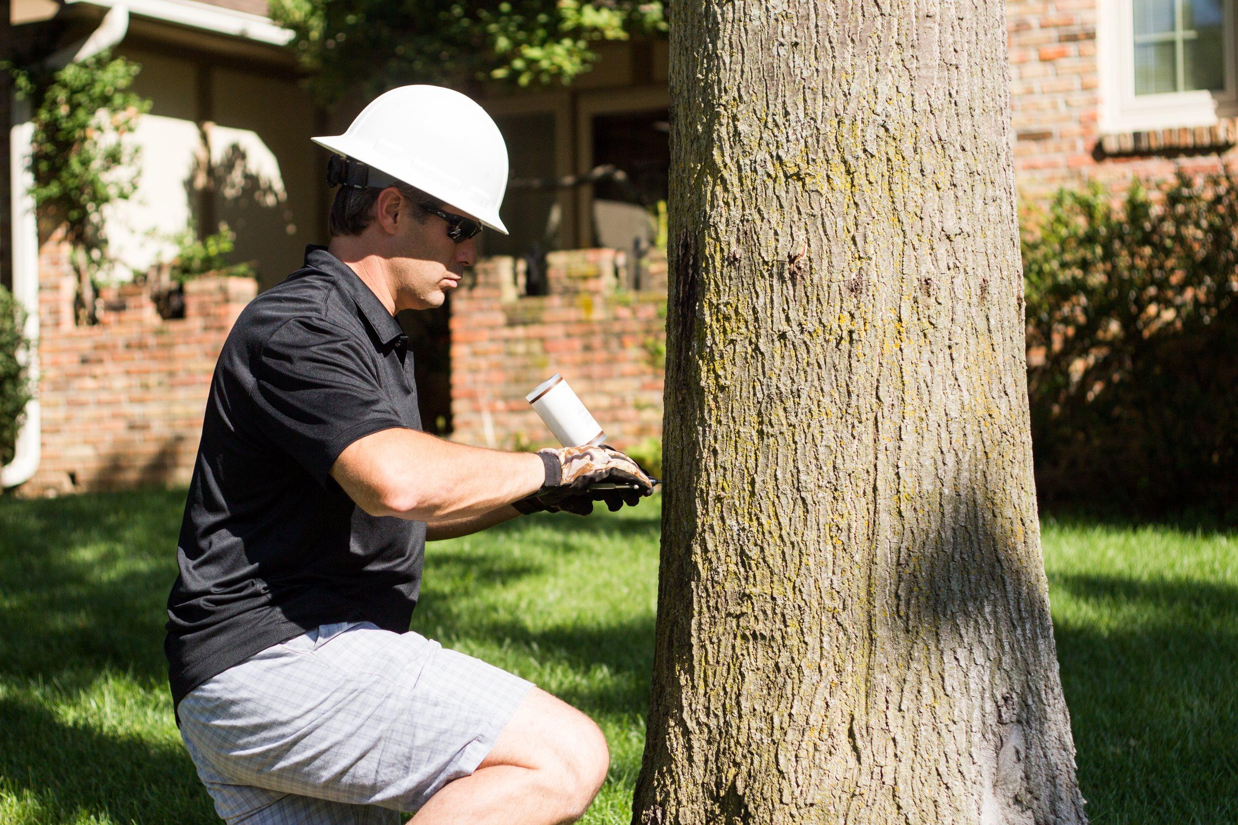 Great Plains Tree Care image 4