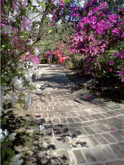 Magnolia Plantation Gardens In Charleston 3550 Ashley River Rd Tourist Attractions In