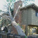 M & H Tree Service LLC