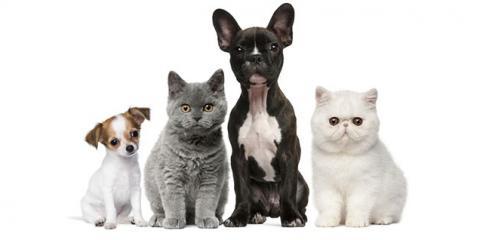 Dykes Veterinary Clinic