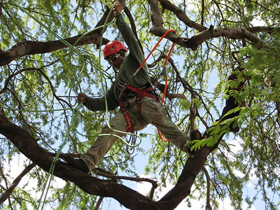 Houston Tree Service image 0