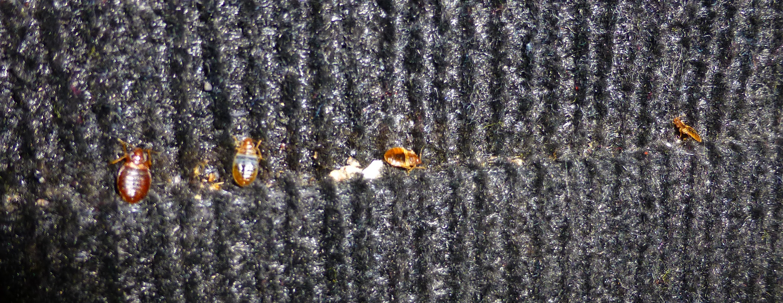 Arizona Heat Pest Services image 8