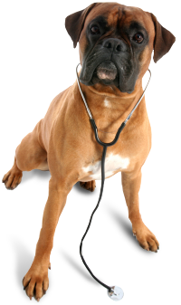 Bay City Veterinary Clinic & Equine Hospital image 0