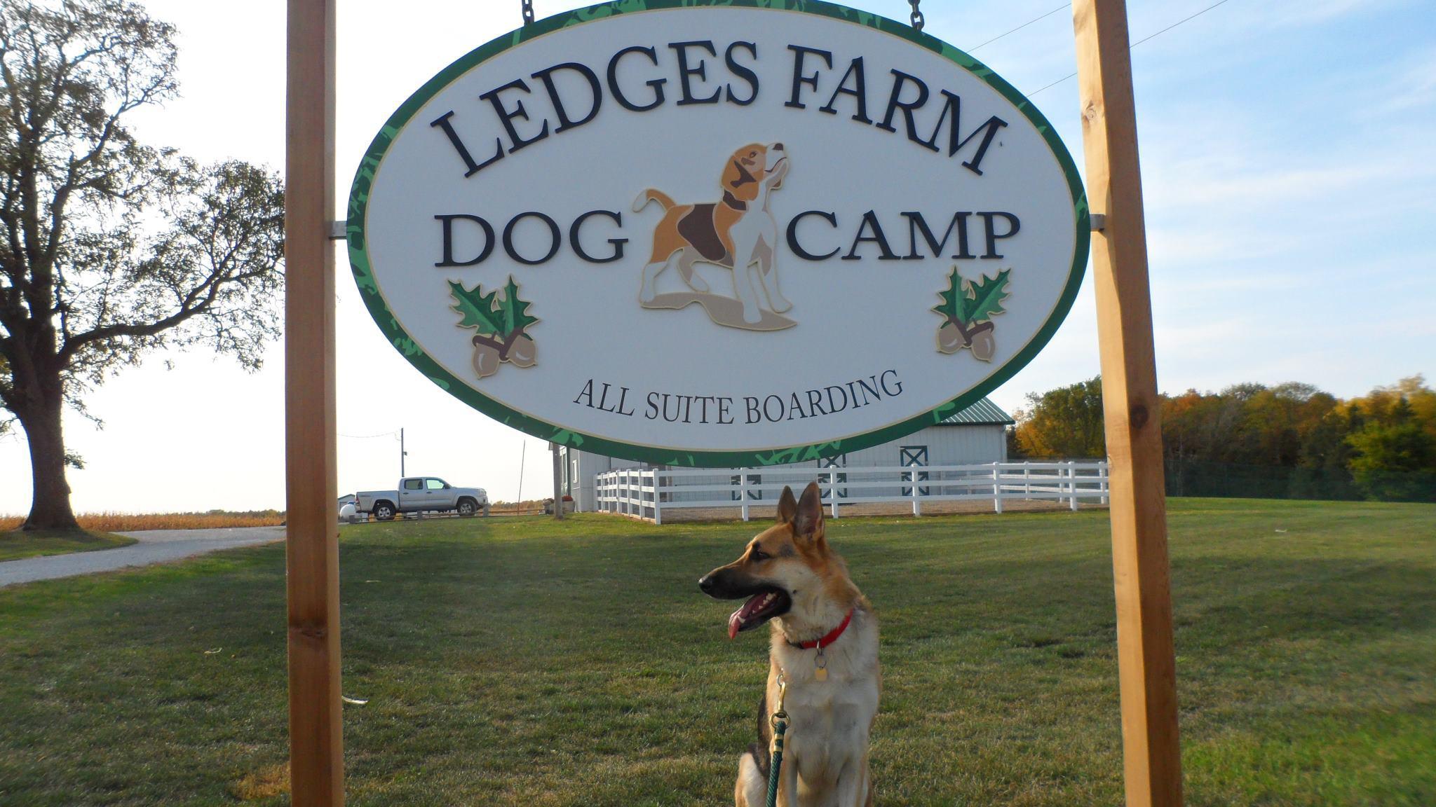 Ledges Farm Dog Camp image 1