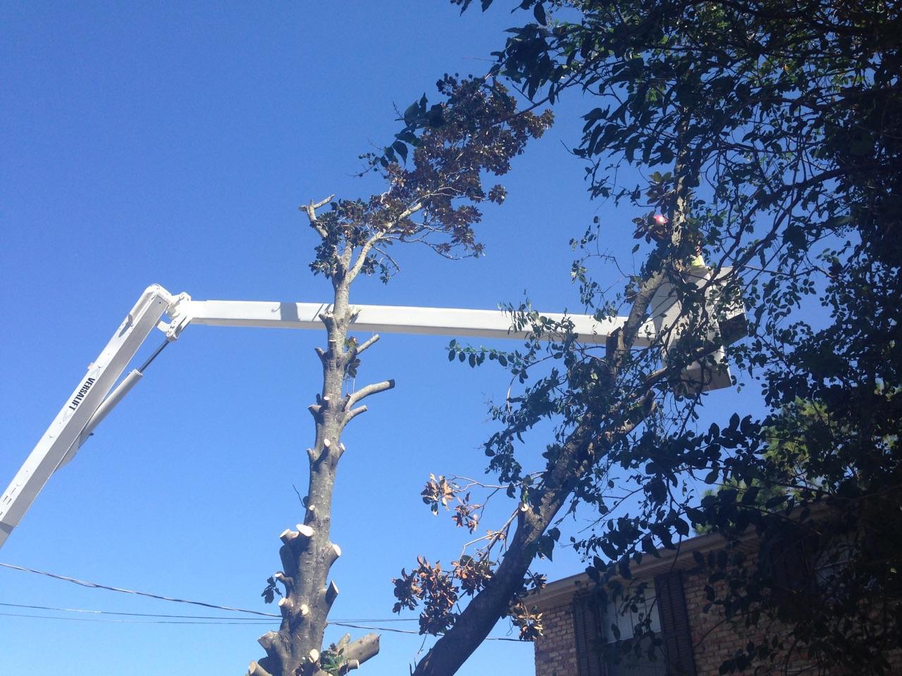 S & L Tree Service & Stump Grinding image 5