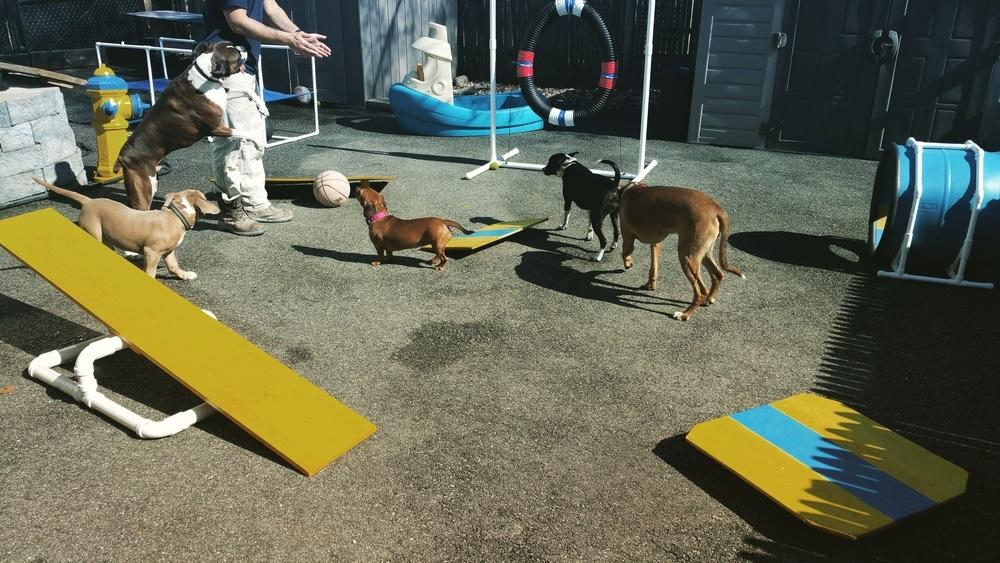 New England Canine image 4