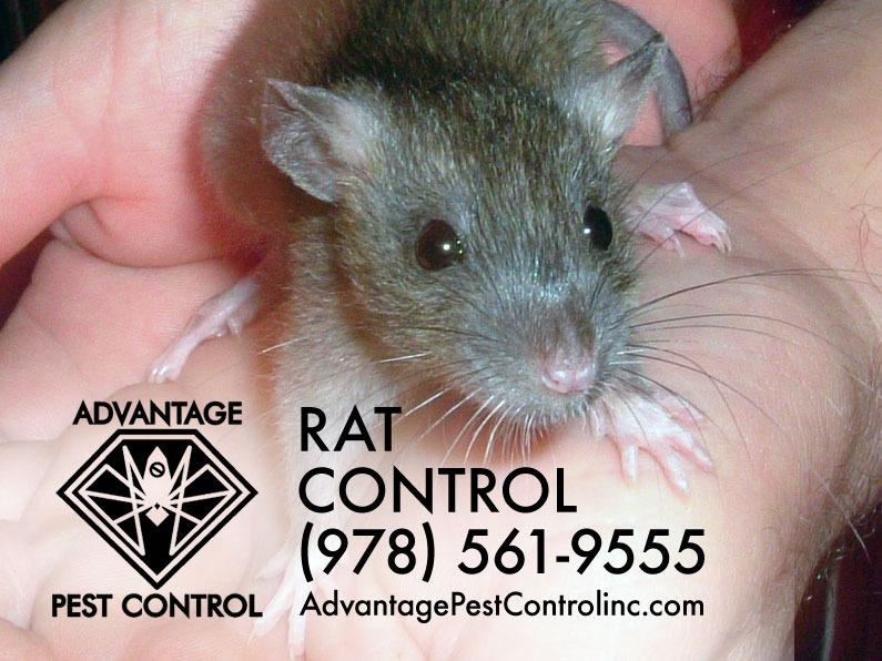 Advantage Pest Control, Inc image 4