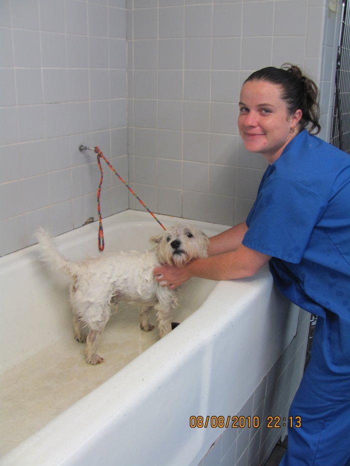 VCA Miracle Mile Animal Hospital image 0