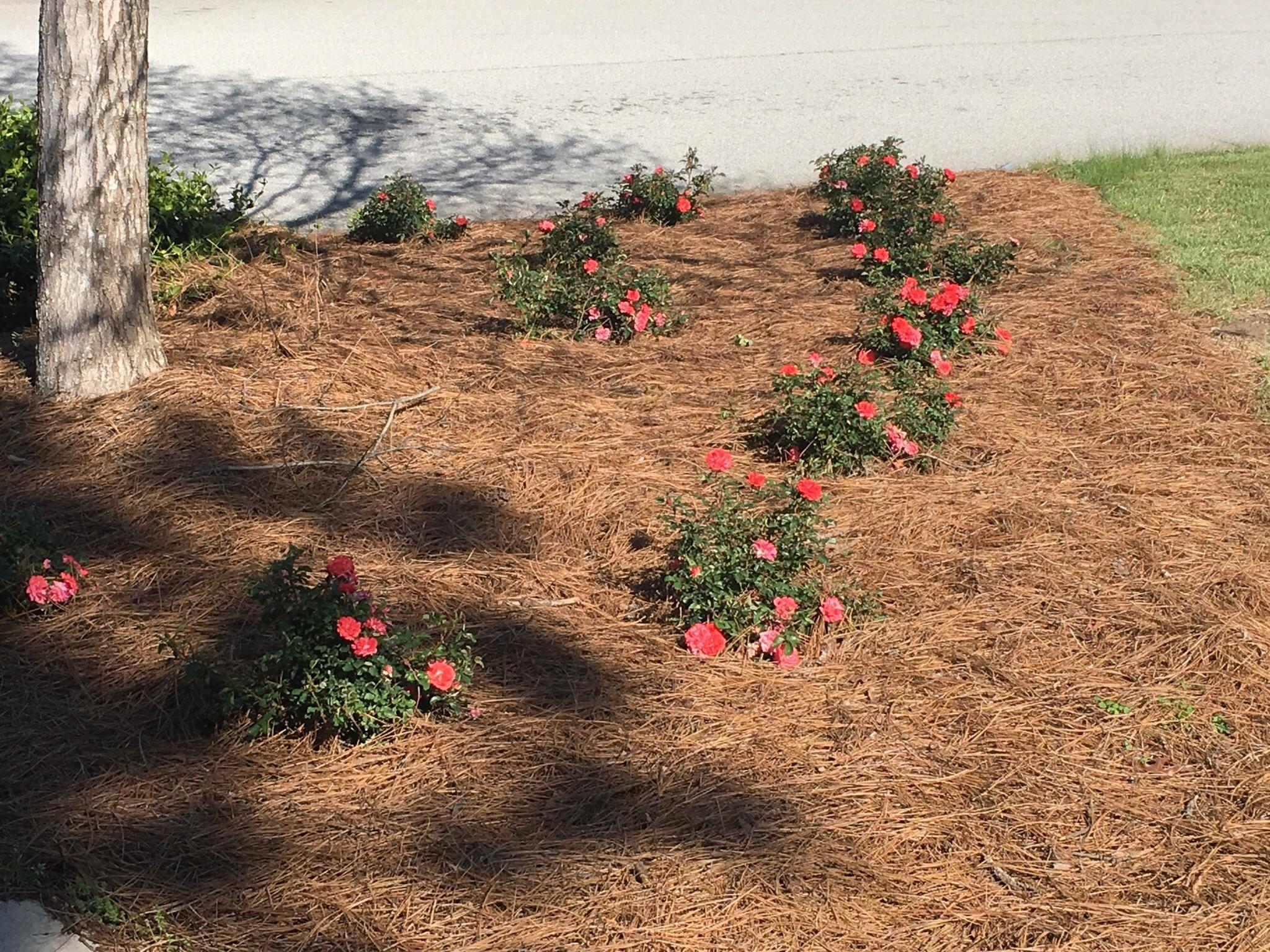 One 12 Landscaping image 7