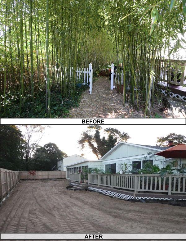 Got Bamboo Inc image 8