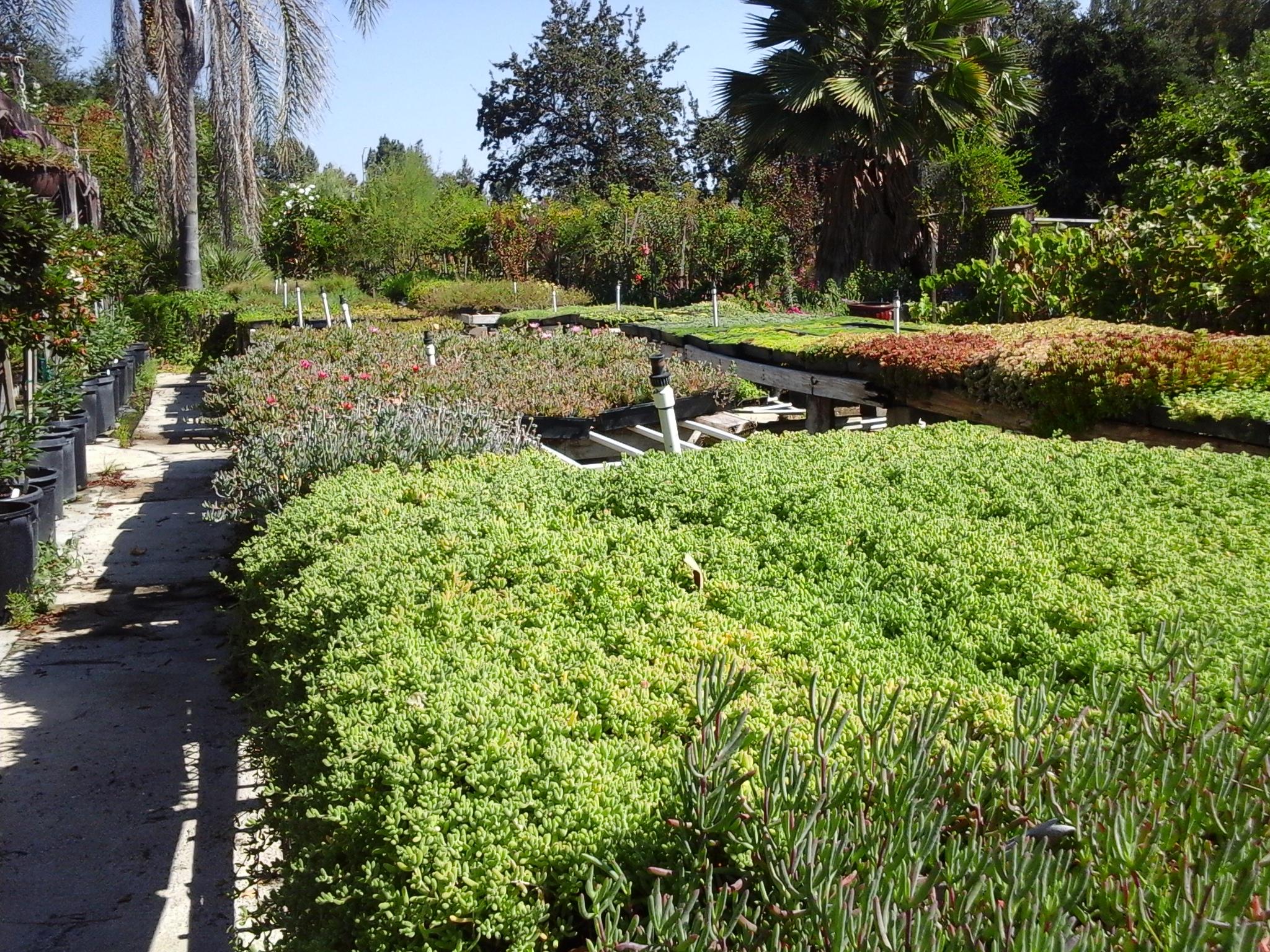 Colorful Garden Center image 2
