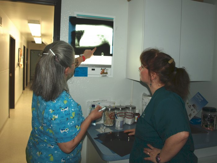 VCA Wingate Animal Hospital image 4