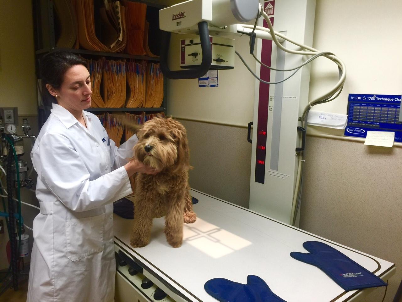 VCA Brown Animal Hospital image 6